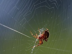 Are all spider webs are of the same substance? | onlinepetanswers | Scoop.it