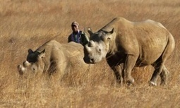 #USA Texan who paid $350000 kills endangered black #rhino in #Africa #FF #Knowlton #greed #oligarchy | Messenger for mother Earth | Scoop.it