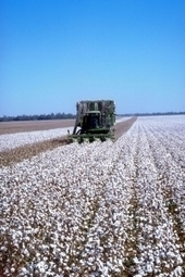Global Cotton Wool Production Continues To Decline in 2013/14 - SPORTSWEAR INTERNATIONAL (subscription) | Ecological Organic Yarn | Scoop.it