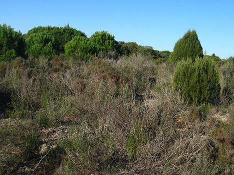 Las sequías alteran la diversidad microbiana del suelo aumentando el CO2 / Noticias / SINC | Activismo en la RED | Scoop.it