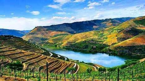 Portugal está a abanar o mundo dos vinhos, diz o USA Today | Portugal faz bem! | Scoop.it