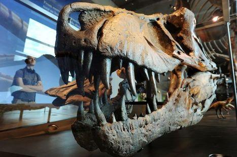 Météorite géante et pluies acides : les (vraies) raisons de l'extinction des dinosaures   Aux origines   Scoop.it