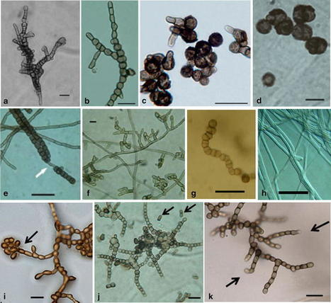 Rock black fungi: excellence in the extremes, from the Antarctic to space | MycorWeb Plant-Microbe Interactions | Scoop.it