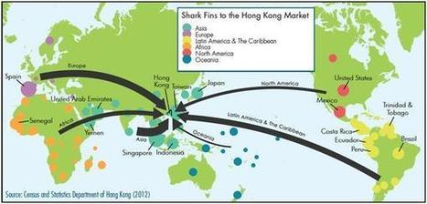 10 million kilos of shark fin imported into Hong Kong in 1 year - How Many Sharks Is That? | OUR OCEANS NEED US | Scoop.it