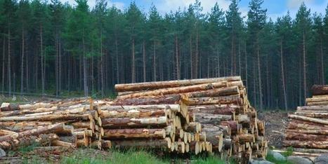 Pour les scieurs, la coupe est pleine | News - Filière bois | Scoop.it