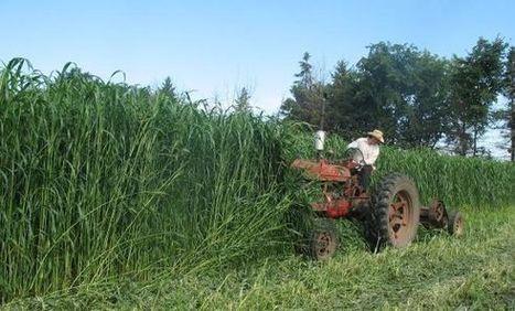 Agricultor chileno ganó demanda contra Monsanto y denuncia daños provocados por transnacional | Infraestructura Sostenible | Scoop.it