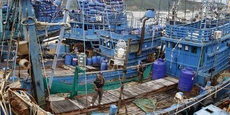 La surpêche et le déclin des ressources ont été largement sous-estimés | Carnets de plongée | Scoop.it