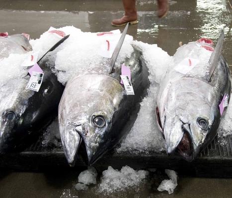 EUROPEAN UNION: WCPFC falls short of EU expectations for the conservation of tropical tunas | Conservation | Scoop.it