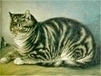 Know your cat - Furballs | Cat Stuff | Scoop.it