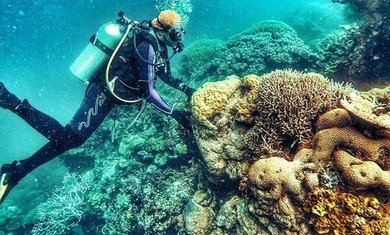 The Great Barrier Reef: a catastrophe laid bare | CCs Geography News | Scoop.it