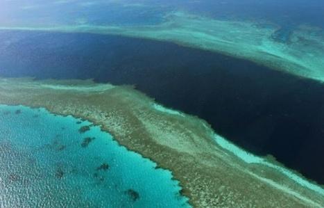 VIDEO. Australie: Des chercheurs découvrent un immense récif corallien sous la Grande Barrière de corail | Biodiversité & Relations Homme - Nature - Environnement : Un Scoop.it du Muséum de Toulouse | Scoop.it