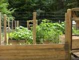 organic gardenin | organic gardening | Scoop.it