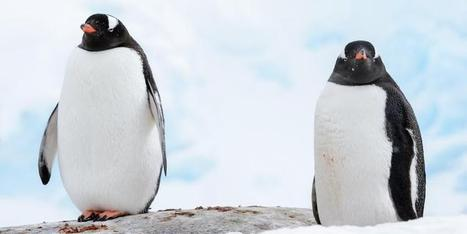 What You Need to Know About Google's Penguin 3.0 | Community management | Scoop.it