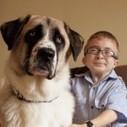 La bouleversante amitié entre Owen et Haatchi | Random | Scoop.it