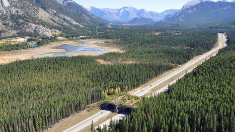 These Incredible Man-Made Highways Are Built Just for Animals | Animals R Us | Scoop.it