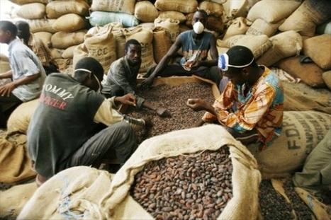 Procès café-cacao / Constitution de partie civile et prescription de l ... - Abidjan.net   FILIERE CAFE CACAO EN COTE D'IVOIRE   Scoop.it