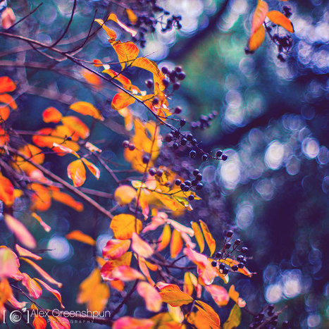 The Magic Of Fall Captured By Alex Greenshpun | ART  | Conceptual Photography & Fine Art | Scoop.it