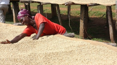 Bonga: Ethiopia's epicenter of coffee... | Coffee News | Scoop.it