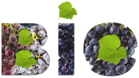 Les chiffres du vin bio | Vin 2.0 | Scoop.it