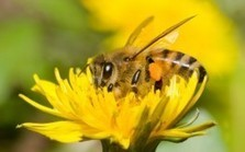 List of Foods We Will Lose if We Don't Save the Bees | Food security | Scoop.it