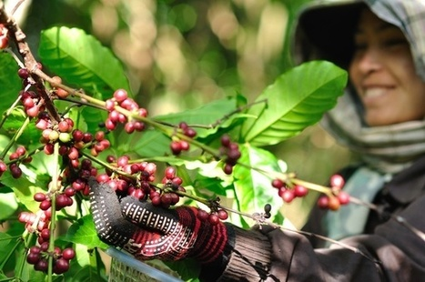 SMEs are making strides toward sustainable sourcing | Year 9-10 Design and Technologies: Food and Fibre futures in the Asia region | Scoop.it