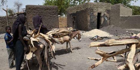 Plus de 2,5 millions de personnes menacées par la faim au Niger | Afrique: développement durable et environnement | Scoop.it