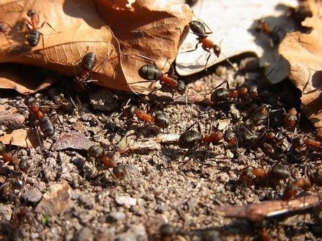 Des armées de fourmis nettoient discrètement... New York ! | Nature et Vie | Scoop.it