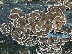 Fungi may have ended the coal era 300 million years ago | Science is Cool! | Scoop.it
