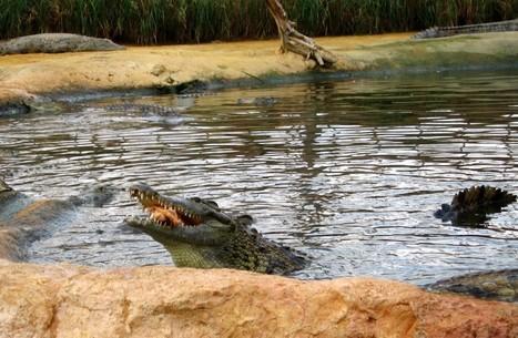 La Ferme aux crocodiles à l'heure de l'Amérique tropicale | Zoos Fermes Parcs | Scoop.it