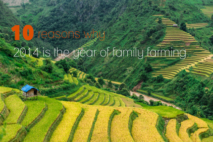 10 reasons why 2014 is the year for family farming | International aid trends from a Belgian perspective | Scoop.it
