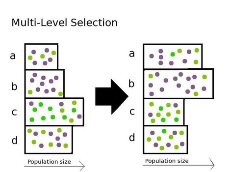 The Selfish Gene can't explain aging –  but neither can Multi-level Selection | Social Evolution | Scoop.it
