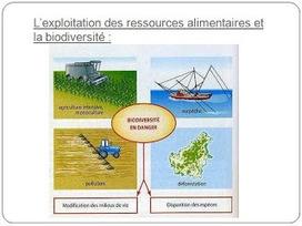 [...]: SVT : Ressources alimentaires et Biodiversité | ressource alimentaire et biodiversité | Scoop.it