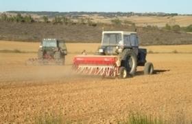 Argentina: La caída del maiz será entre el 20 y 25% | Maíz | Scoop.it