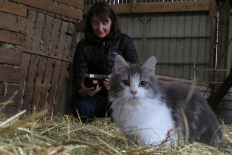 Trois petits chats et un documentaire ! - 1jour1actu.com - L'actualité à hauteur d'enfants ! | ça m'intéresse! | Scoop.it
