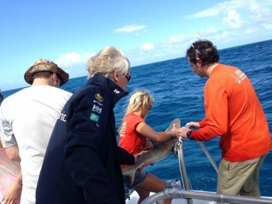 Tagging the first ever shark in the BVI - Virgin.com | Marine Science and Conservation | Scoop.it