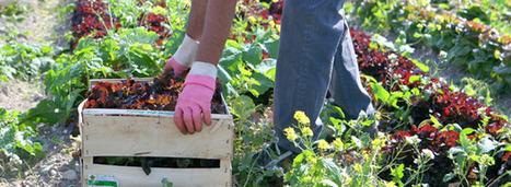 Les Français toujours plus accros au bio | consommation biologique | Scoop.it