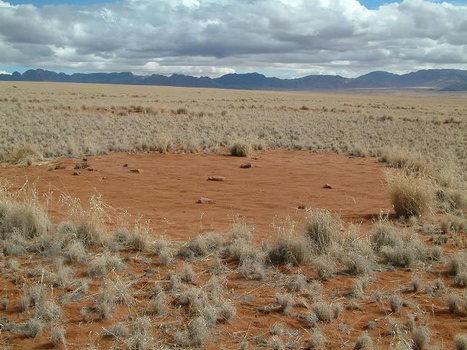 Les mystérieux cercles de fées de Namibie sont «vivants» | Merveilles - Marvels | Scoop.it