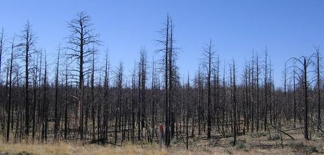 le désespoir environnemental * 1 - la Saint Chronique | Vivre Nature | Scoop.it