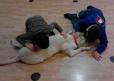 Fallece 'Guinness' una perra de asistencia que realizaba terapia ... - Safor Guia | Terapias con animales en niños con TEA | Scoop.it
