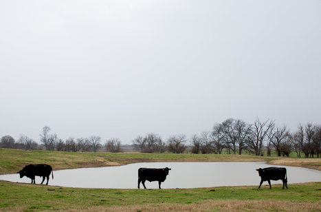 A Long Drought Tests Texas Cattle Ranchers' Patience and Creativity | Sustain Our Earth | Scoop.it