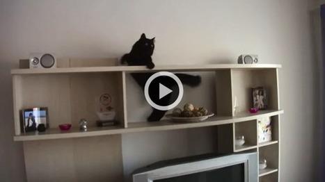 Un chat, une mission impossible ! (Vidéo du jour) | CaniCatNews-actualité | Scoop.it