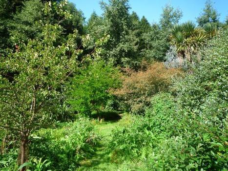 Introducing Forest Gardening - Beautiful, Productive, Edible Gardens | forest gardening | Scoop.it
