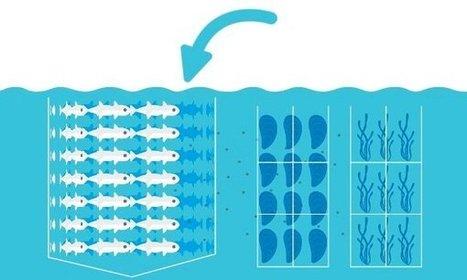 The fish farm of the future - interactive   Aquaculture Directory   Scoop.it