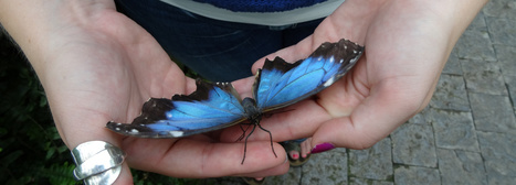 Niagara Park's Butterfly Conservatory | LadyoftheZoos | Scoop.it
