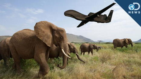 Using Drones to Protect Nature | MishMash | Scoop.it