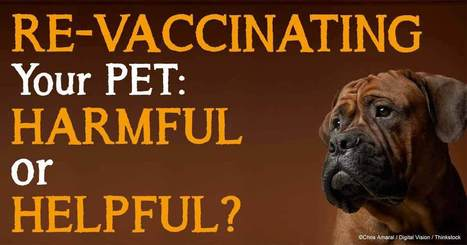 How Often Should You Give Your Pet a Vaccination? | Pet Health | Scoop.it