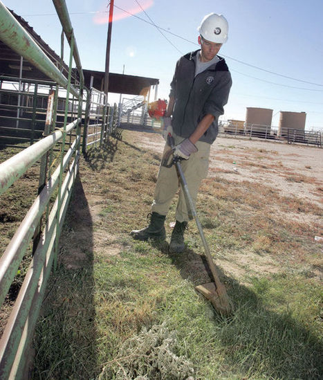 Helping hands: AmeriCorps team assists with projects around Pinal County | Copa Monitor (AZ) | CALS in the News | Scoop.it