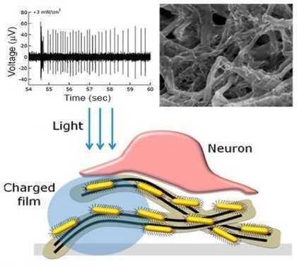 Wireless nanorod-nanotube film enables light stimulation of blind retina | Amazing Science | Scoop.it