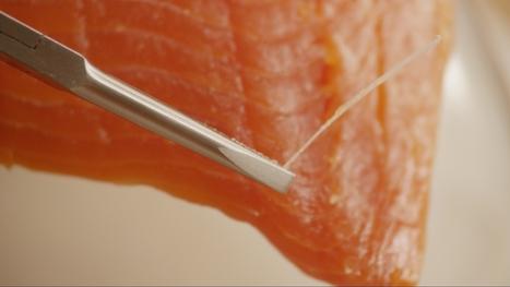 How to de-bone a fish fillet | tips | Scoop.it