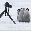 Penguins: Close Encounters | Photography Tips & Tutorials | Scoop.it